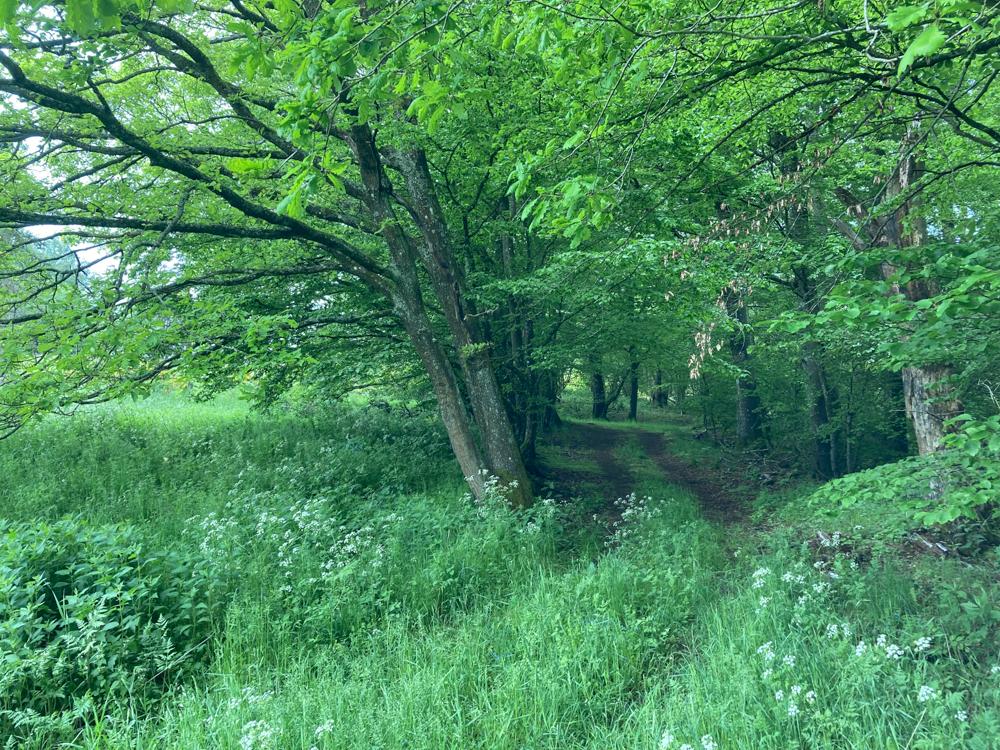 Schon vorhandener naturnaher Waldrand
