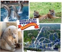 zoo, safari, animaux