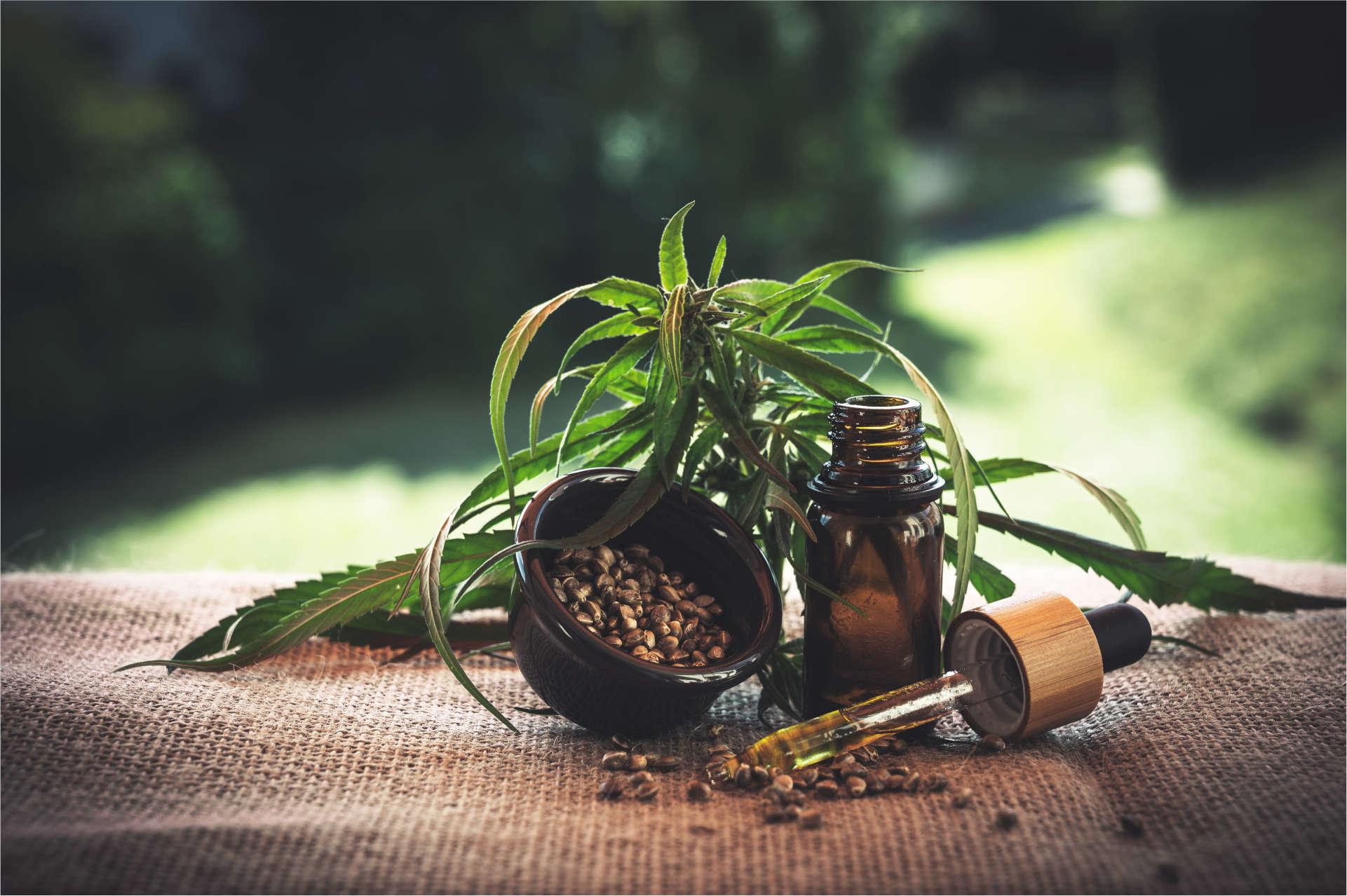 Cannabisanbau bald in Thailand erlaubt?