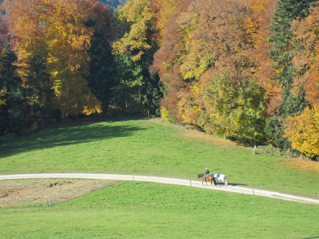 Ausritt im Herbst
