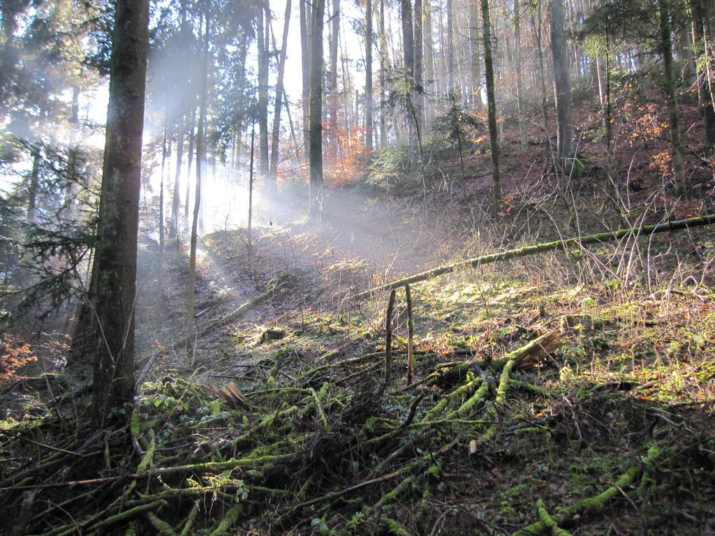 Geheimnisvolle Stimmung im Wald