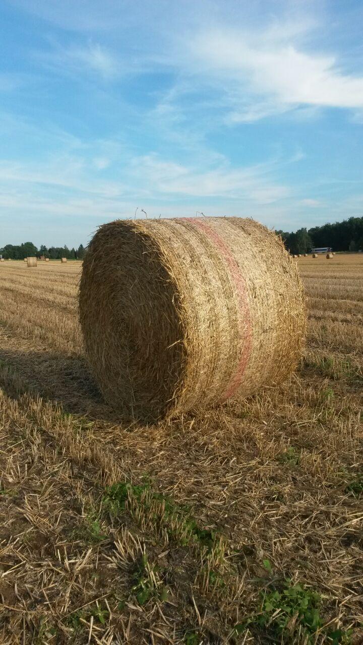 Umgeben von Kornfeldern...