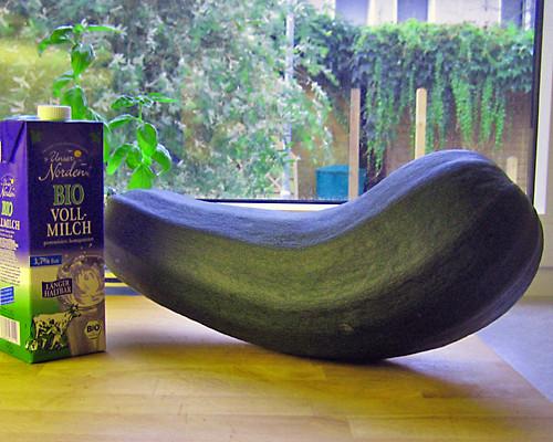 Die Monster-Zucchini. Sie wurde übrigens eine Suppe.