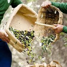 Olio extra vergine di oliva della riviera ligure all'Ombelico Rivoli Torino
