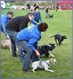 Aufstellung des Mensch / Hund Teams bei einem Lauf der LuHu Wild Dogs