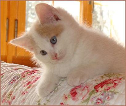 Nochmals unsere Priscilla als kleines Kätzchen ... sie beendete unsere katzenlose Zeit