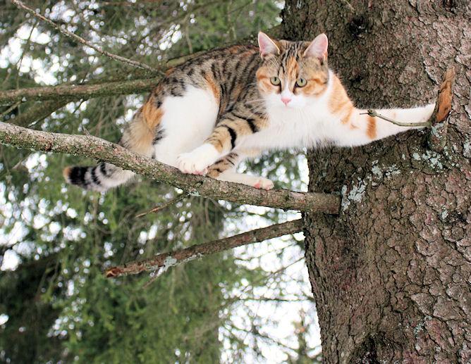 Unsere Katze Ronja liebt das Klettern ... und fällt schon auch mal vom Baum