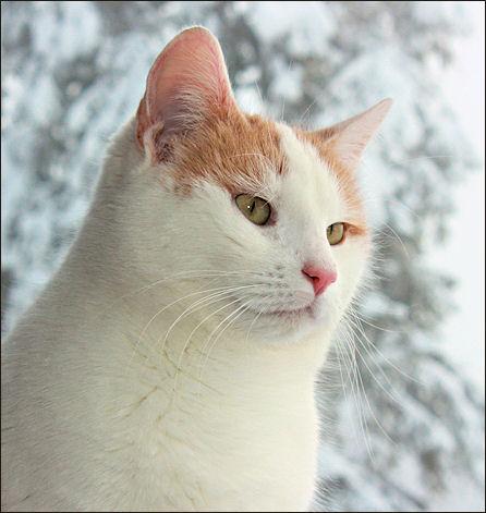 Unsere Katze Priscilla ist schon 9 Jahre alt und schon einen  Tick ruhiger geworden