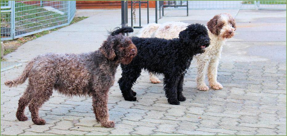 Unser Hundetrio: Lucilla, Leia und Emilia
