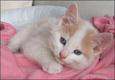 Als Priscilla noch ein junges Kätzchen war ... blauäugig und einfach zuckersüss