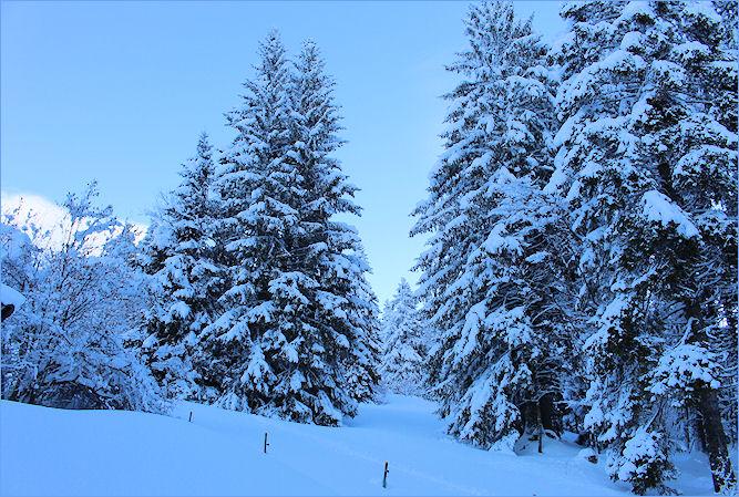 Blaue Stunde im Winterwald