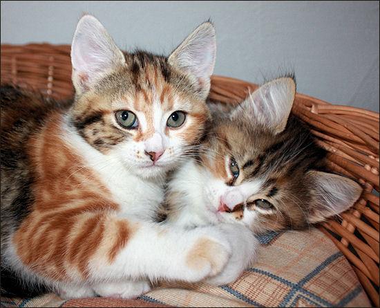Die Kätzchen waren immer zuckersüss und stellten unseren ganzen Haushlat auf den Kopf
