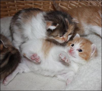 Die kleinen Kätzchen fangen an zu Spielen ... den TV verkaufen und zugucken und geniessen!