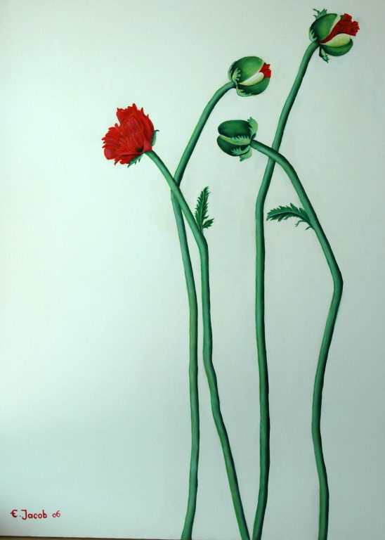 Dancing Poppies 100 x 80 cm  2006