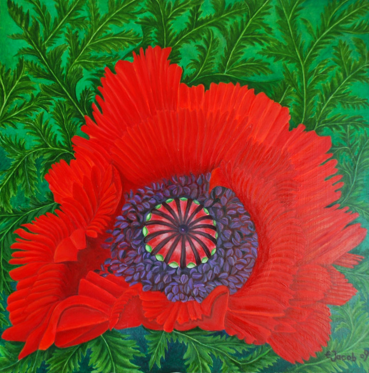Poppy Flower  50 x 50 cm Oil on Board 2009