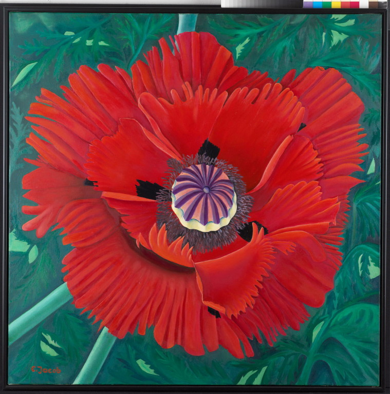 Poppy Flower 90 x 90 cm  Oil on Canvas 2004