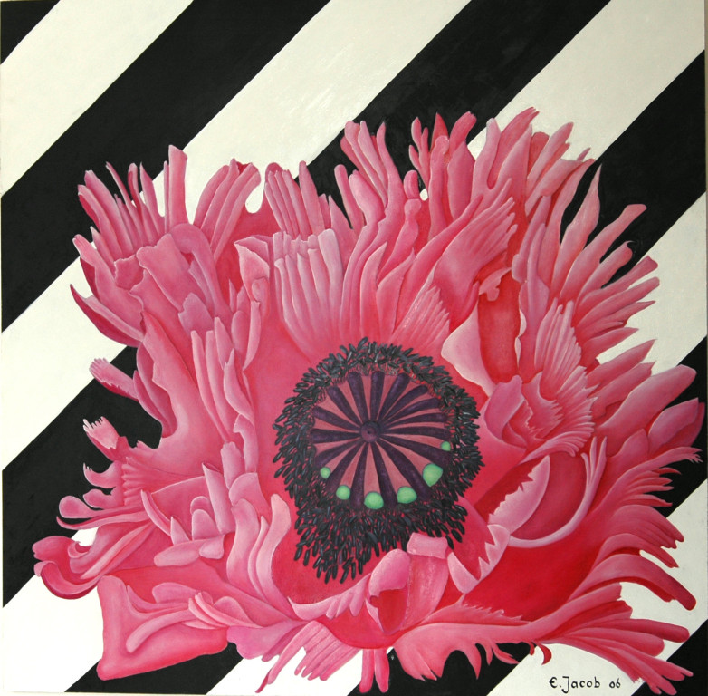 Pink Poppy 90 x 90 Oil on Board