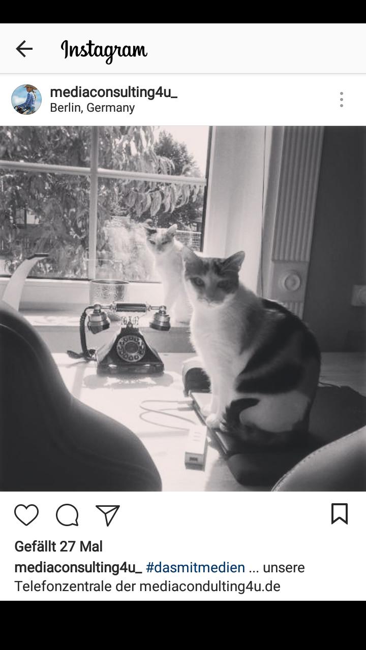 @mediaconsulting4u_ setzt auf Doppel-Cat-Content.