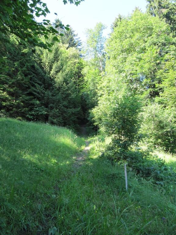 Wanderweg verschwindet im Wald