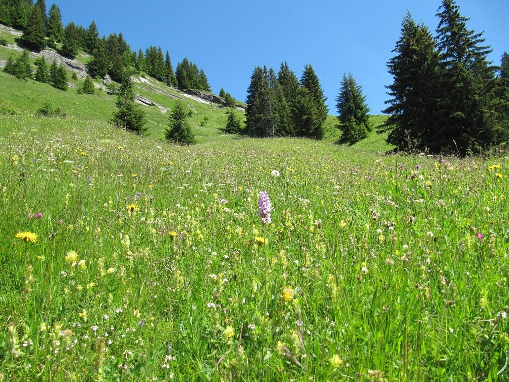 Trockenstandort: steile Blumenwiese