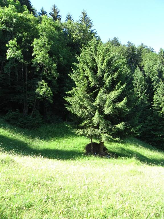 Einzelbäume