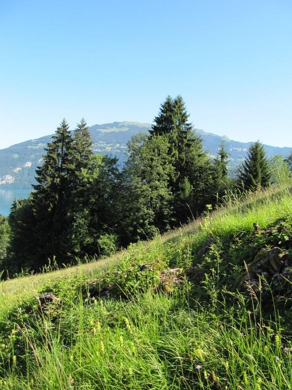 Ausblick Richtung Niederhorn