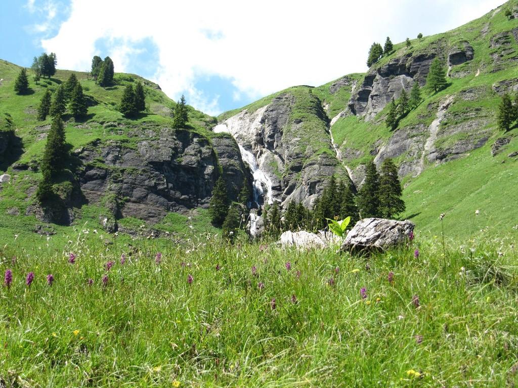 Feldbach mit Orchideen im Vordergrund