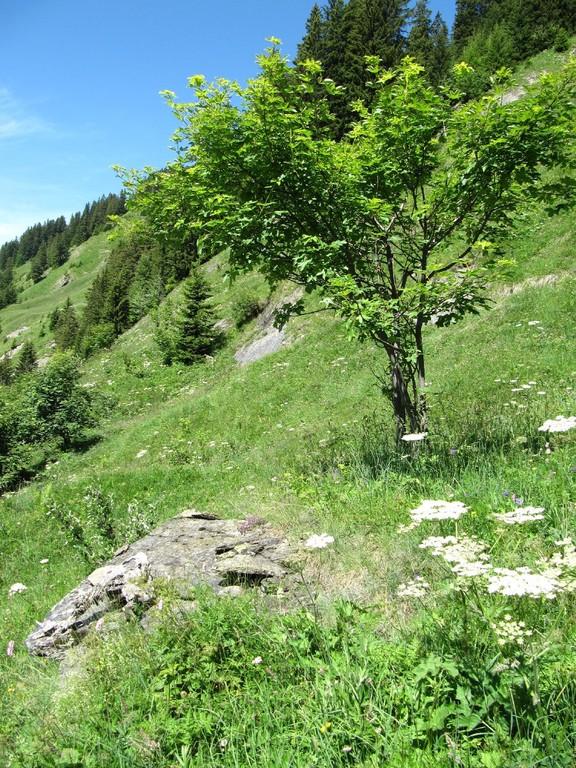 Steil, Kleinstrukturen, Einzelbäume und Büsche