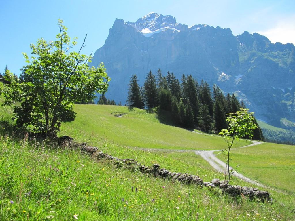 Trockensteinmauer vor dem Wetterhorn