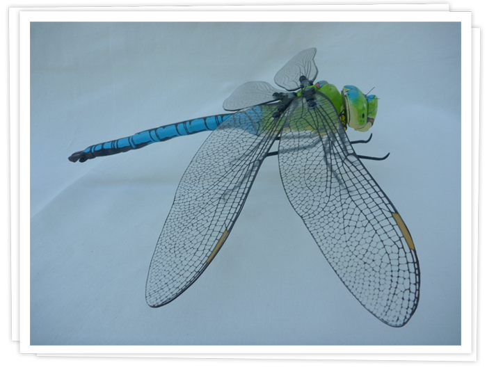 Maquette d'Anax Imperator.