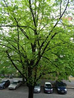 """""""Endlich Regen. Der Baum vorm Fenster lässt die Blätter nicht mehr hängen,  wie noch vor 2 Tagen."""" - Michael, Berlin"""
