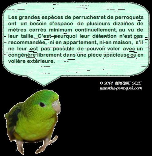 Favorisez l'adoption de petites espèces de perruches et perroquets, et non pas des grandes, qui souffriront plus facilement de la captivité.