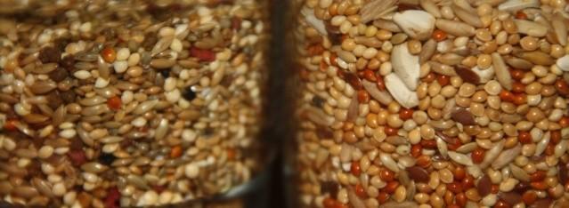 Graines pour perruches
