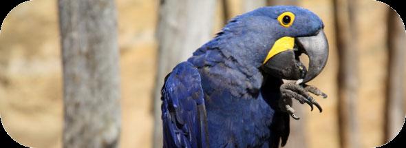 L'alimentation des perroquets