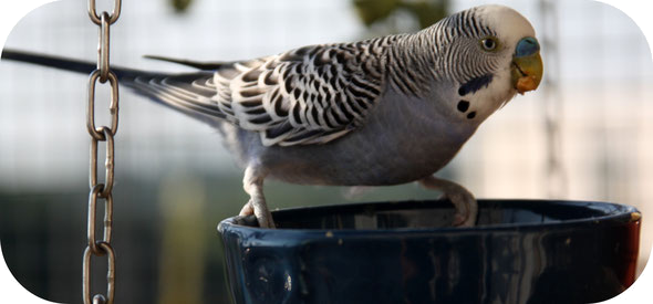 reportages perroquet et perruche video