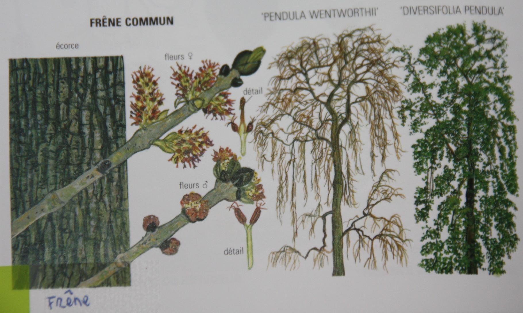 liste des plantes arbres bois et v g taux non toxiques et toxiques perruches et perroquets. Black Bedroom Furniture Sets. Home Design Ideas