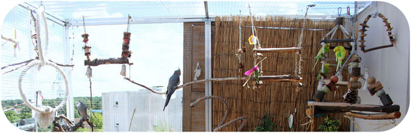 Volière perruches et perroquets