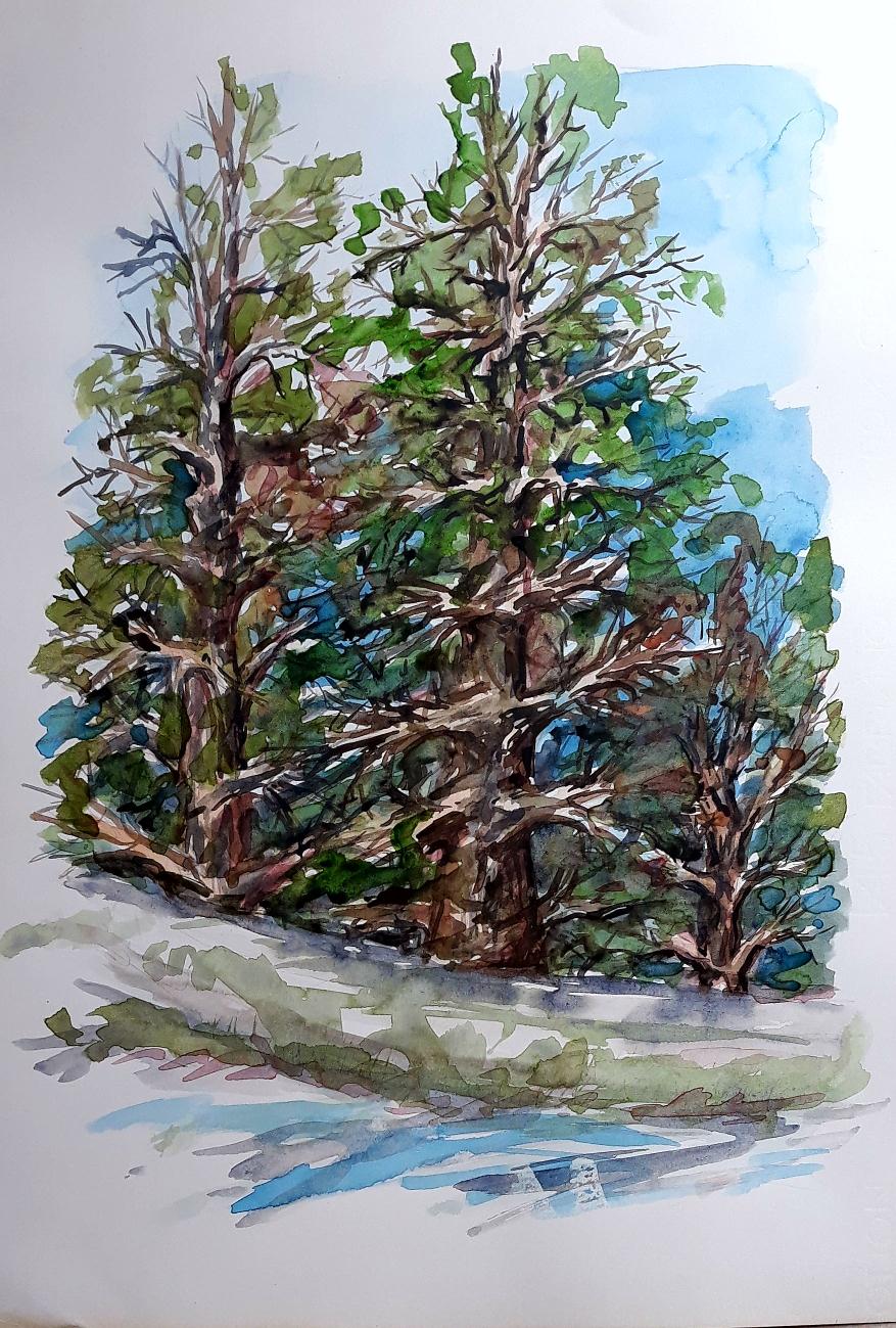 Acquarello alberi