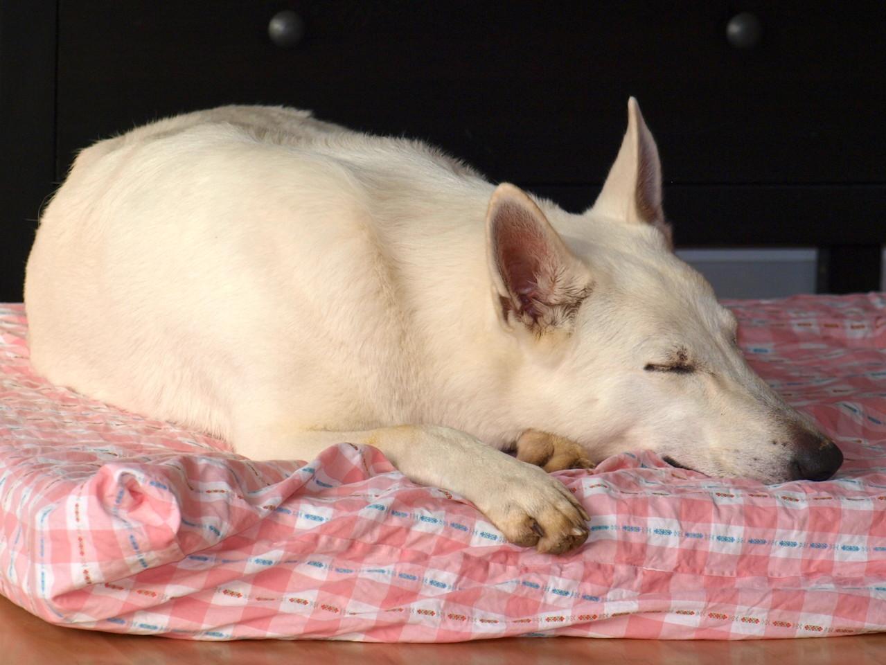 Arjuna macht eine kurze Pause