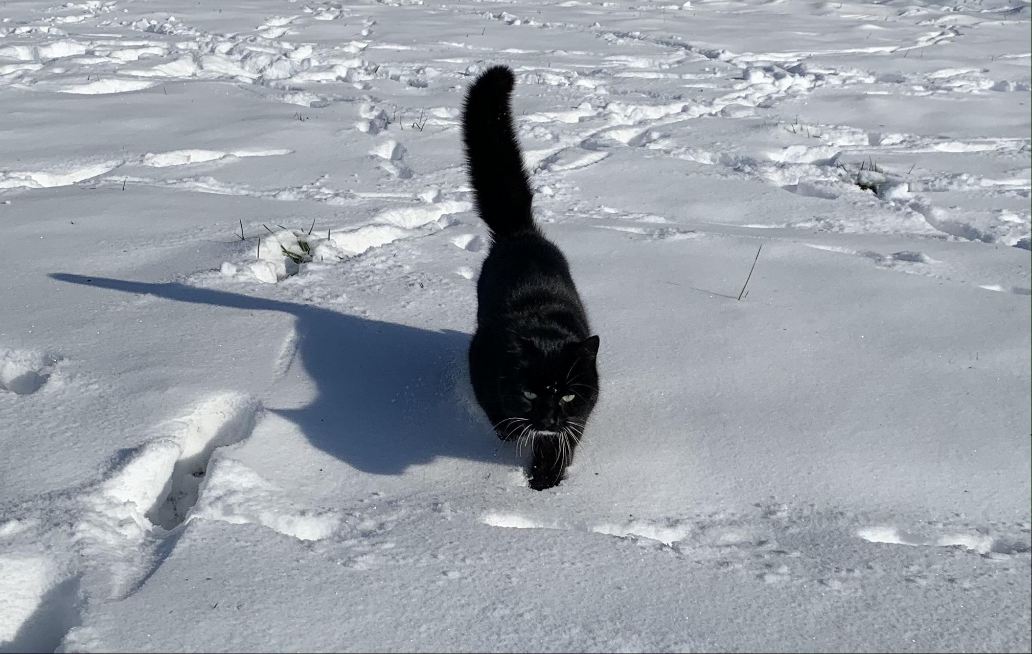 Kasper genießt auch das schöne Wetter