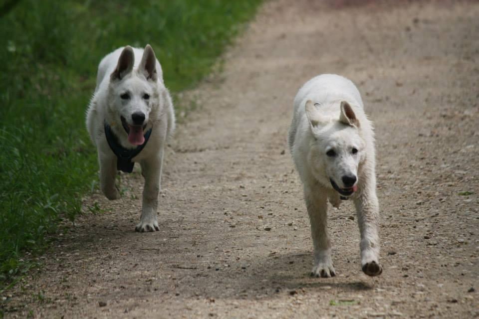 Akira und Milow