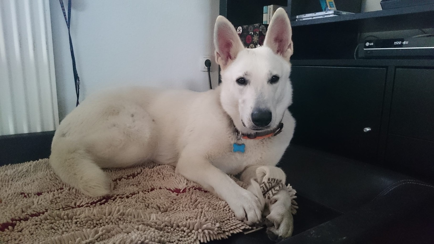 Akira, 2 Jahre