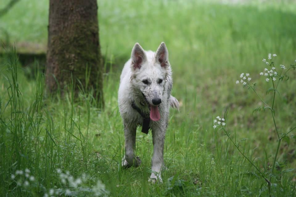 Aiyana, der kleine Wolf