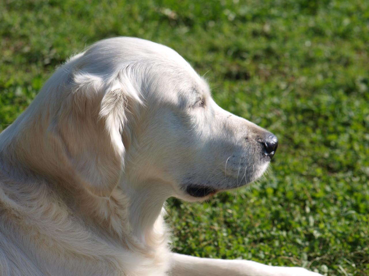 Lotta genießt die Sonne