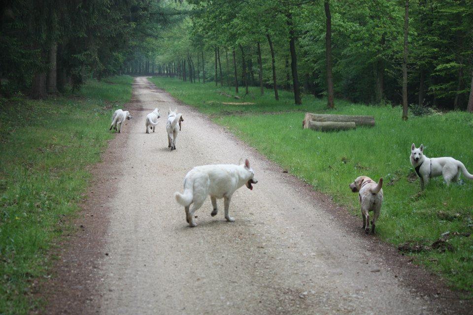 unendliche Weiten für die Hunde