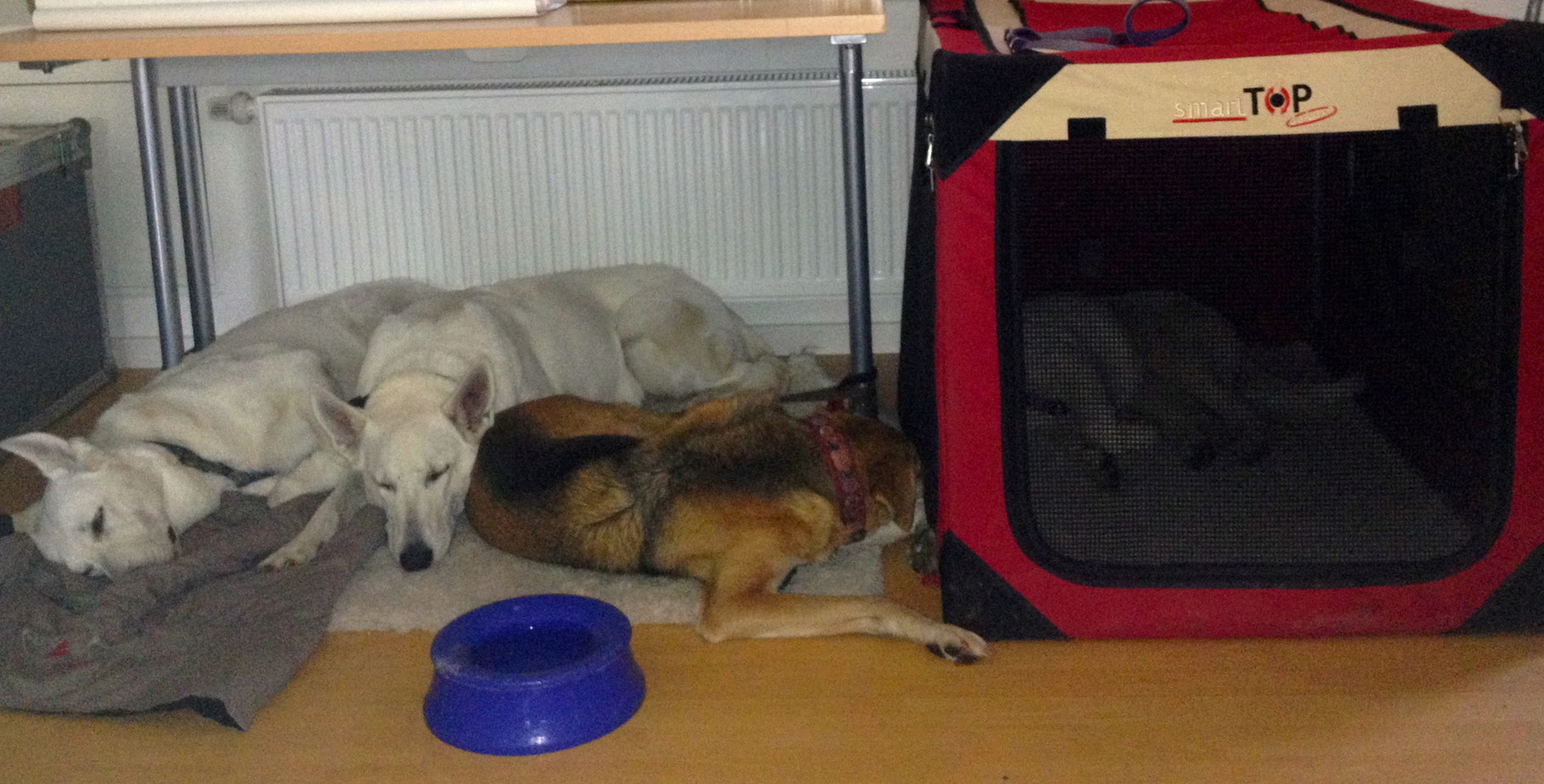 alle vier schlafen während ich unterrichte