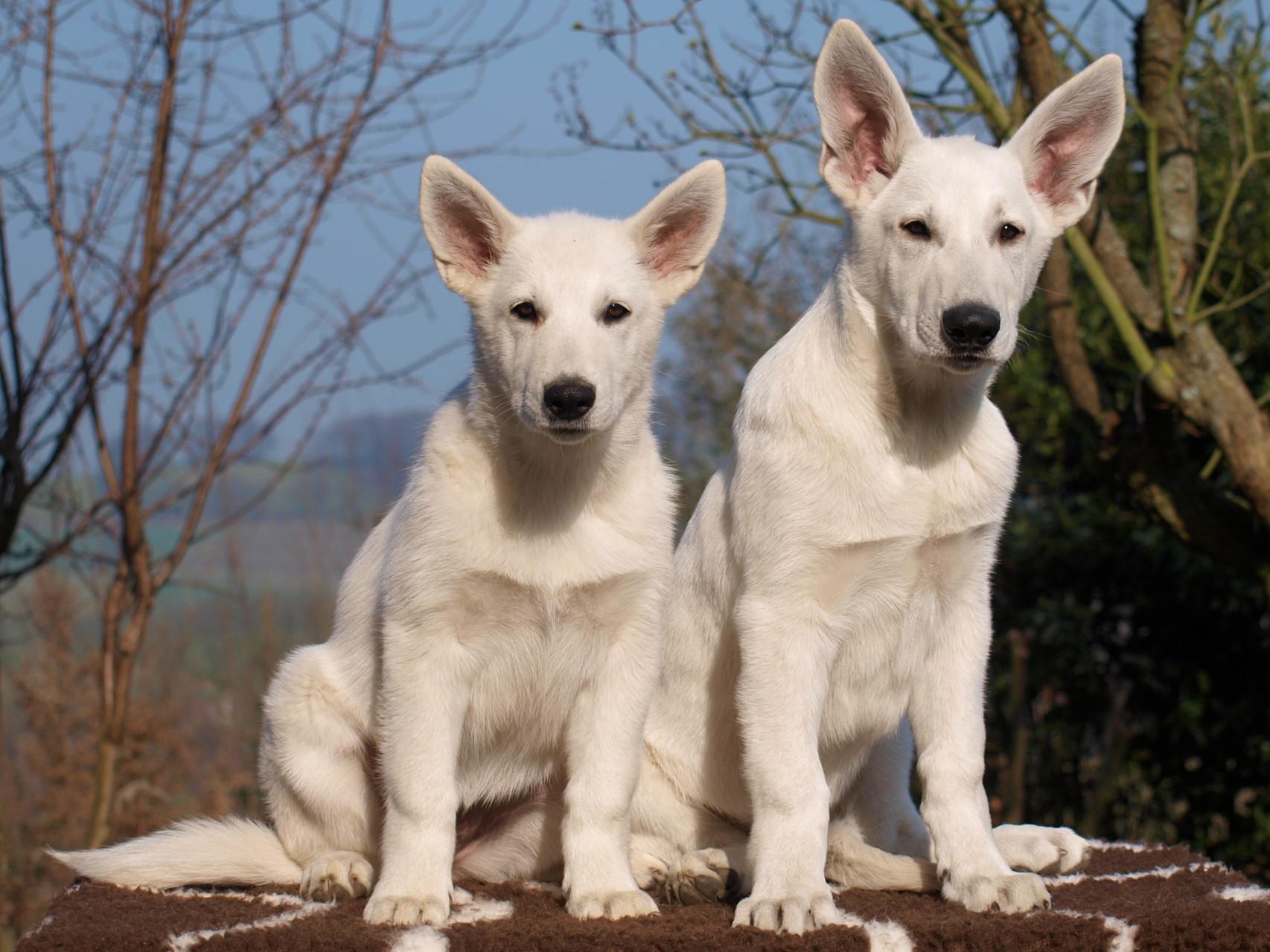 die kleine Milka und der große Cody - zwei, die sich mögen