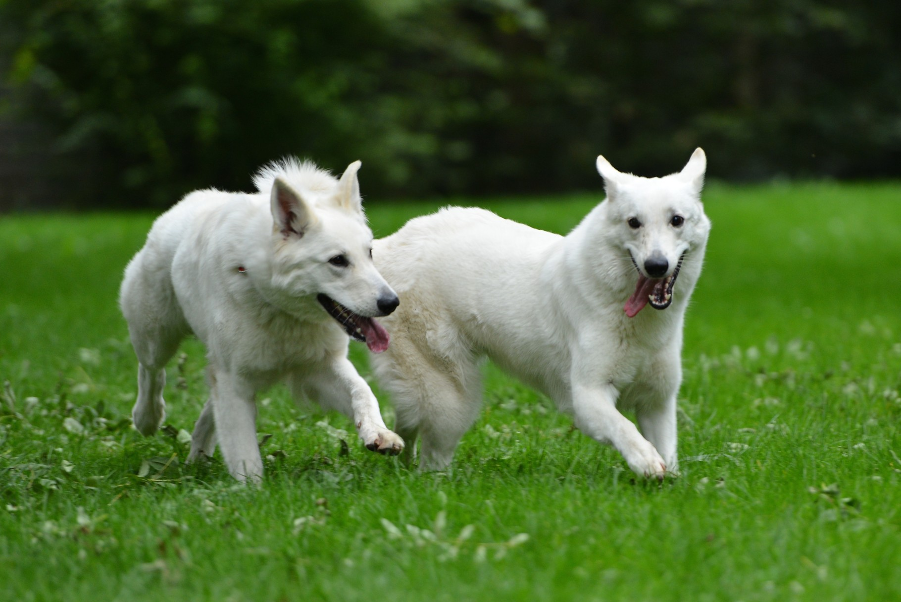 Aiyana und Milka beim Wettrennen