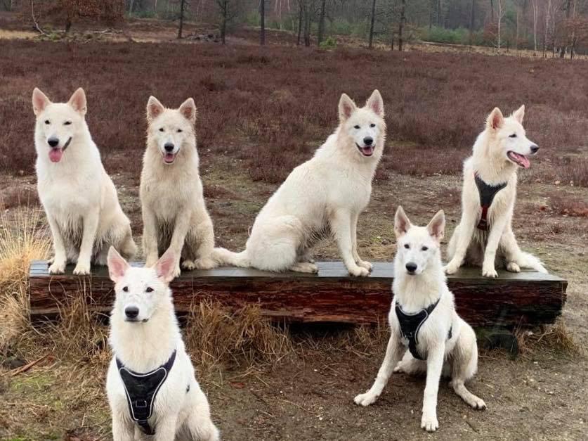 Milka und 5 ihrer Kinder aus dem C-Wurf