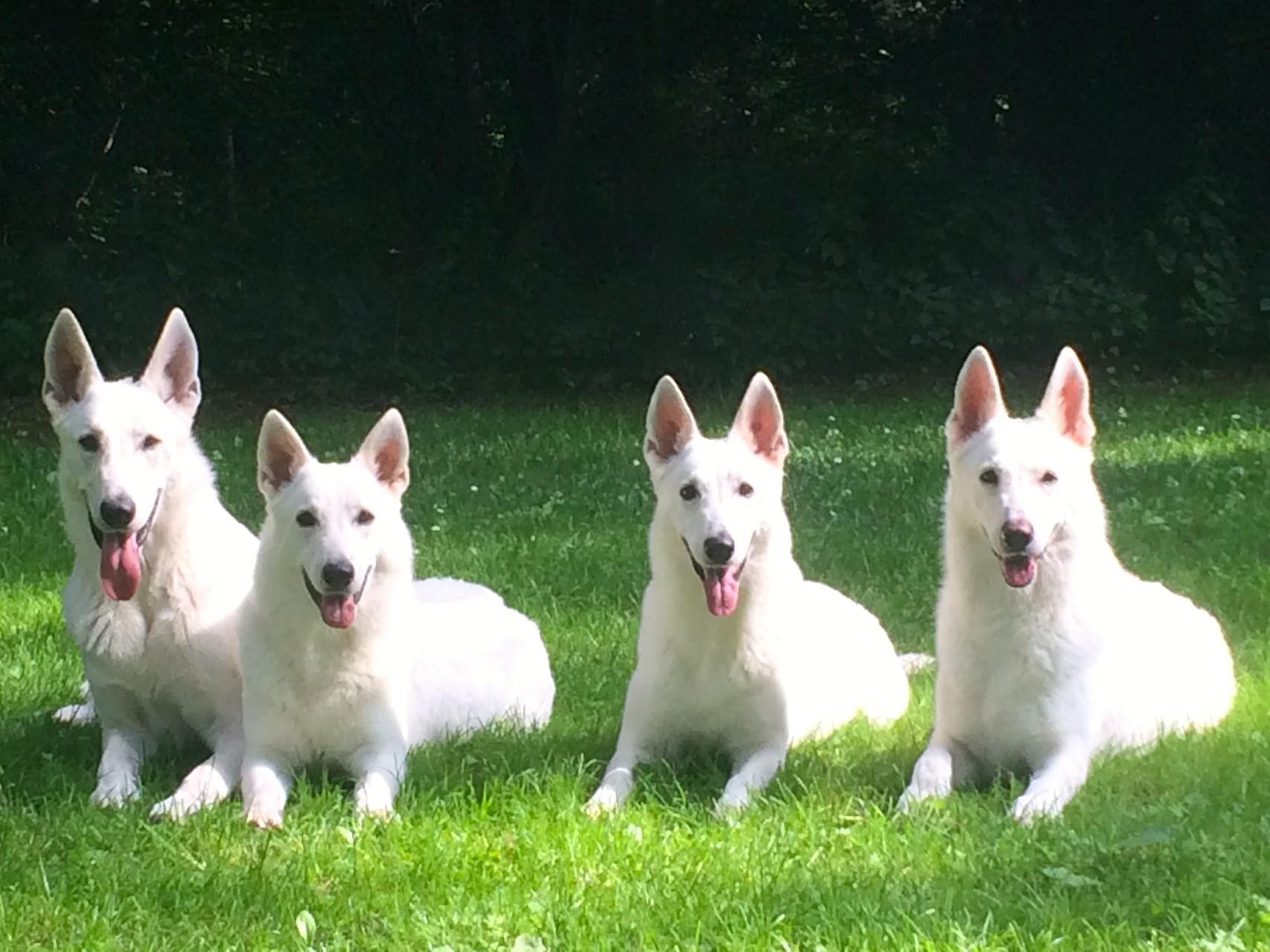 Cody, Milka, Arjuna, Gaia